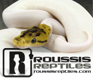 click here for Roussis Reptiles