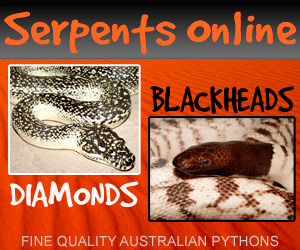 click here for the SerpentsOnline.com
