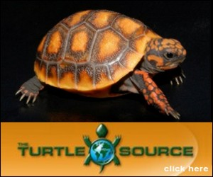click here for The Turtle Source
