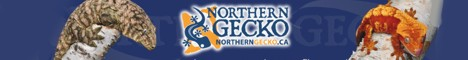 click here for Northern Gecko