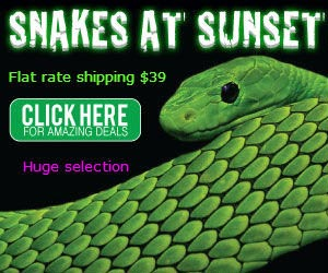 click here for Snakes at Sunset