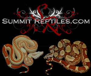 click here for Summit Reptiles