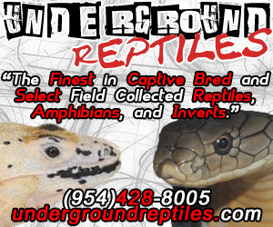 click here for Underground Reptiles