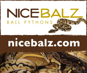 click here for NiceBalz.com