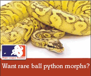 click here for Major League Reptiles