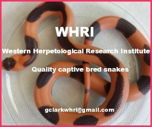 Click here for WHRI