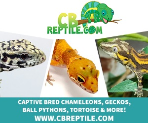 click here for CBReptile.com
