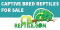 Chameleons, Geckos, Tortoises, Tegus and Ball Pythons for sale online