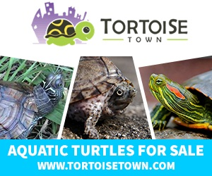 Click here for TortoiseTown