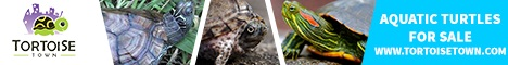 Turtles & Tortoises for sale online