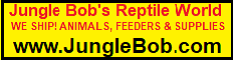 Click here for Jungle Bob